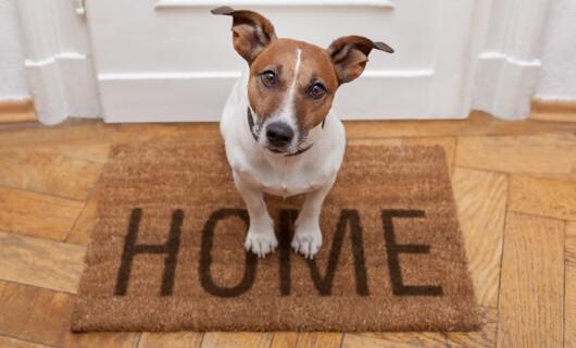 Dog on door mat | Wacky's Flooring