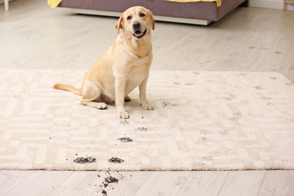 Rug care | Wacky's Flooring