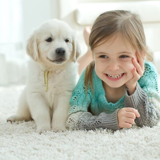 Dog and kid on mohawk Carpet | Wacky's Flooring